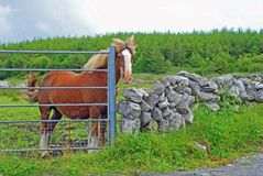 A Horse At The Gate Royalty Free Stock Photos