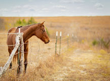 Horse at the gate Royalty Free Stock Images