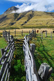 Horse Gate in Patagonia. Close to Torres del Paine, Chile, South America Stock Images