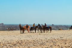 Horse Gathering at Giza Pyramids royalty free stock image