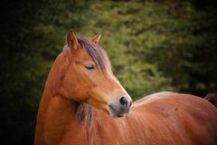 Horse in Germany Stock Image
