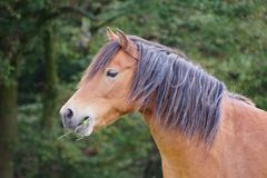 Horse in Germany. Nature walk animal Stock Photography