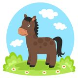 Horse on glade. In summer Royalty Free Stock Image