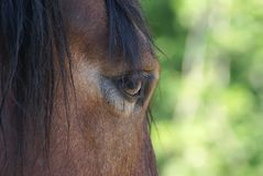 Horse glance Stock Photos