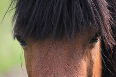 Horse glance. Stock Photo