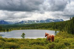 The horse goes to the lake. In the background of the mountains in bad weather Stock Image