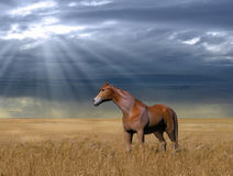 Horse in a Golden Wheat Field. 3D painting of a beautiful horse standing in a golden wheat field against a cloudy, rainy sky Royalty Free Stock Photo