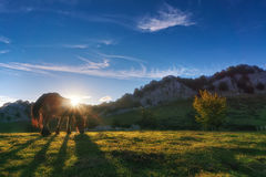 Horse in Gorbea at sunset. Horse in Gorbea at the sunset Stock Image