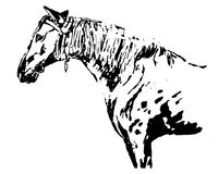 Horse graphic freehand drawing (black and white) Stock Photos