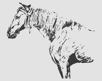 Horse graphic freehand drawing (gray tones) Stock Photo
