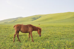 Horse on grass Stock Photos