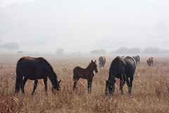Horse on the grass. Feeding the horses on the grass Stock Images