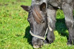 Horse, Grass, Fauna, Pasture stock photography