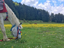 Horse on the grass. Horse feeding on the grass Royalty Free Stock Image