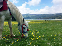 Horse on the grass. Horse feeding on the grass Stock Images