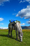 Horse, grass, mountains Stock Image