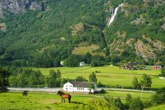 Horse on grass pasture on mountain landscape in Flam, Norway. Horse on green meadow sunny day. Summer landscape with Stock Images