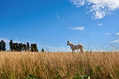 Horse in the grass Royalty Free Stock Images