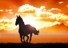 Horse on grassland Stock Photo