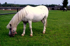 Horse. The horse on the grassland Royalty Free Stock Image