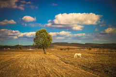 Horse. A horse on the grassland of china Stock Images