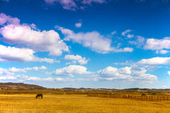 Horse. A horse on the grassland of china Stock Photography