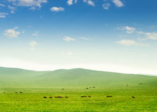 Horse on the grassland Stock Images