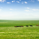 Horse on the grassland Stock Photos