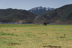 A horse on grassland Stock Photo