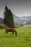 Horse on graze. Brown horse on green graze with fog hills Stock Photo