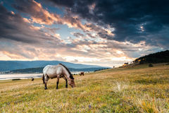 Horse graze by the lake at sunset. Beige horse with black ruff Royalty Free Stock Image