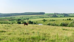 Horse graze in the meadow. Fields and meadows, landscape royalty free stock photo