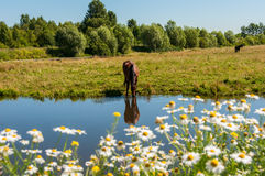 Horse graze meadow pond Stock Photos