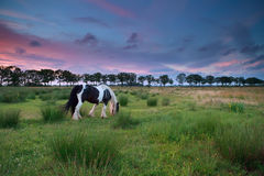 Horse graze on pasture at sunset Royalty Free Stock Images