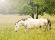Horse graze Royalty Free Stock Images