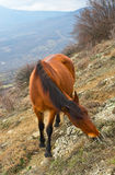 The horse is grazed on slope Stock Photography