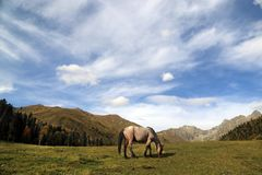 Horse grazes in the Caucasus mountains royalty free stock photography