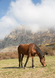 A horse grazes on a background of mountains Stock Photography