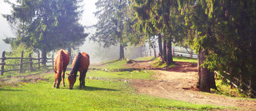 A horse grazes in the fog Stock Photography
