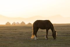 A horse grazes in front of a Yurt settlement near Song Kul Lake. In Kyrgyzstan at sunset Stock Photo