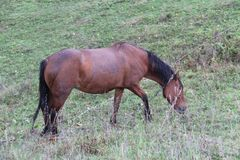Horse grazes on a green meadow stock photography