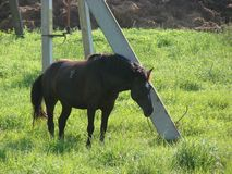 Horse tied to a post royalty free stock photos