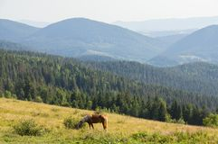 A horse is grazing in the mountains. A horse grazes on a lawn in the mountains Royalty Free Stock Photos