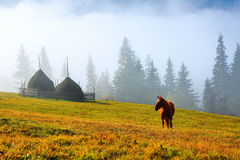 A horse grazes on the meadow among the high mountains. A beautiful brown horse stands on the lawn with a view of high mountains with fog Stock Image