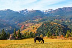 A horse grazes on the meadow among the high mountains. A beautiful brown horse stands on the lawn with a view of high mountains Royalty Free Stock Image