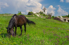 Horse grazes near church in Old Orhei, Moldova Royalty Free Stock Image