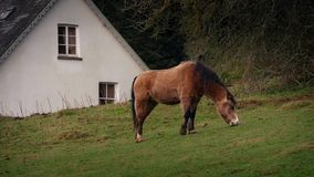 Horse Grazes Near House In The Countryside. Tranquil rural scene of horse grazing by a house stock video