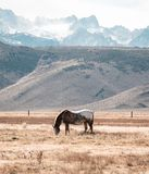 A horse grazes in a pasture in the foothills stock photography