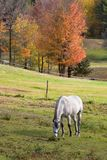 Horse Grazing. In Pasture in Autumn Royalty Free Stock Images