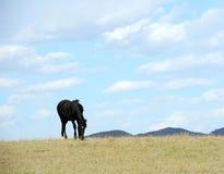 Horse grazing in autumn field. Stock Photos